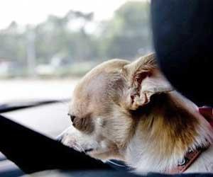 車-シート-洗浄-方法-シミ取り-臭い取り-嘔吐-おしっこ-業者-料金-目安-ペット-画像