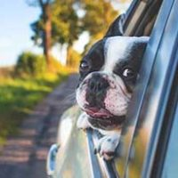 車-ペットシートカバー-助手席-後部座席-画像