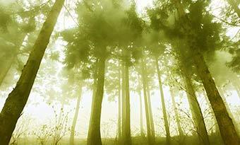 車内-花粉-対策-エアコンフィルター-交換-杉-画像